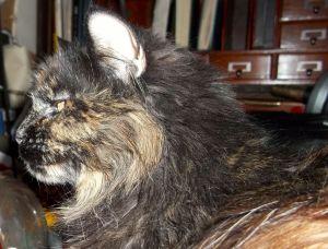 Queen Louise