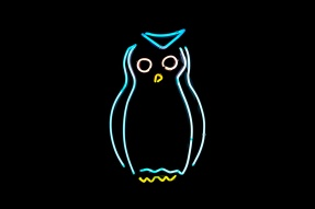 Neon light owl
