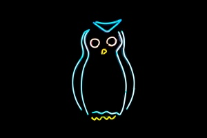 Neon light owl